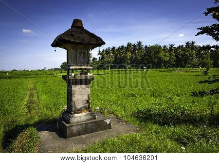 Balinese rice field agricultural landscape on sunny summer day