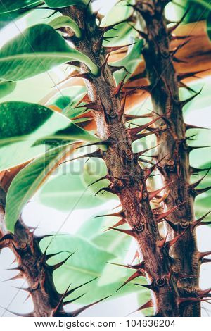 Rose's white thorns detail, artistic toned, shallow DOF photo