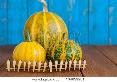 Fall pumpkins centerpiece behind toy wooden fence. The concept of farm and household. space for a te