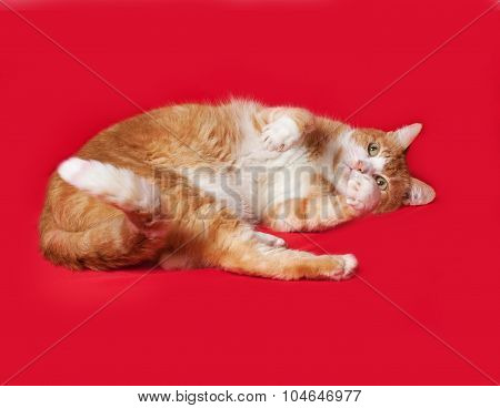 Red And White Cat Lying On Red