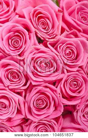 Pink natural roses background pattern