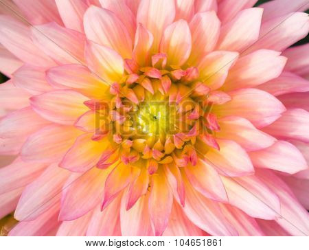 Close up of flower for background or texture.