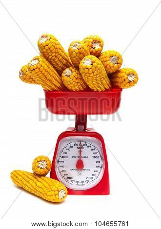 Kitchen Scales And Ears Of Corn Isolated On White Background
