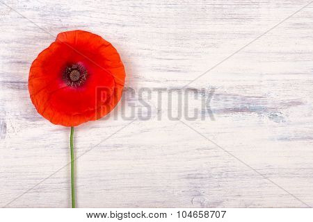 Poppy On Old White Wooden Table Closeup
