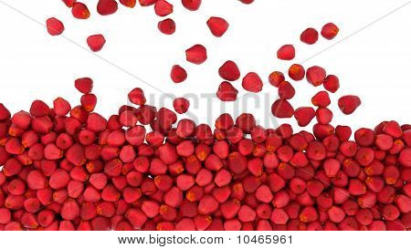 Red Apples Falling Down Isolated