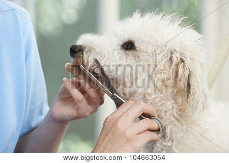 Pet Dog Being Professionally Groomed In Salon