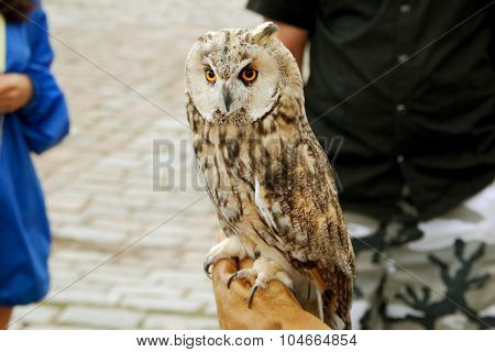 Tamed Serious Owl at the Square in City