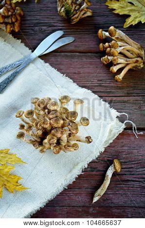 Wild honey agaric mushrooms on wooden background