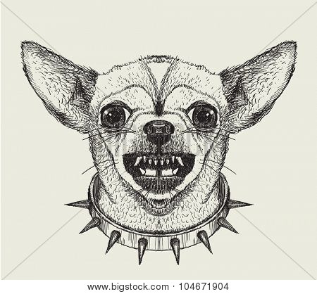 Hand drawn graphic sketch illustration of angry chihuahua  dog face wearing a studded collar, front view.