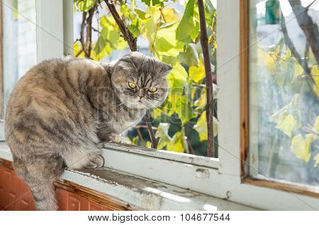 Cat Sits On The Balcony.