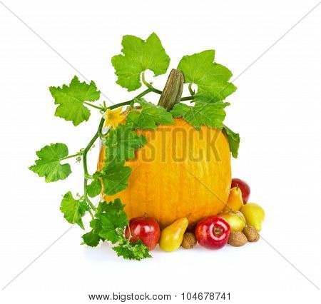 Still Life Of Vegetable Fruit And Nut