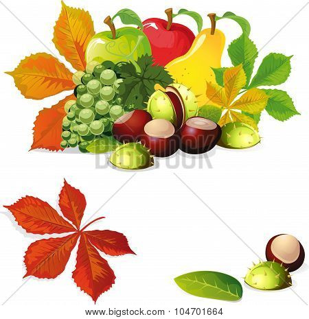 Autumn Fruit And Leaves - Vector Illustration