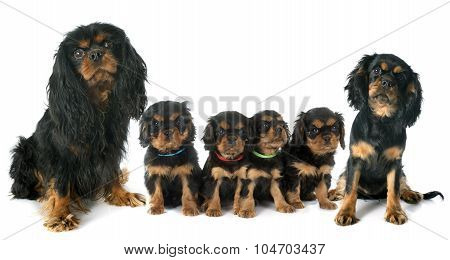 Family Cavalier King Charles