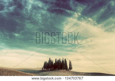 Cypress trees on the field in Tuscany, Italy at sunset. Tuscan landscape in vintage, retro mood