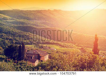 Vineyard and farm house, villa in Tuscany, Italy. Cypress trees. Sunset warm light