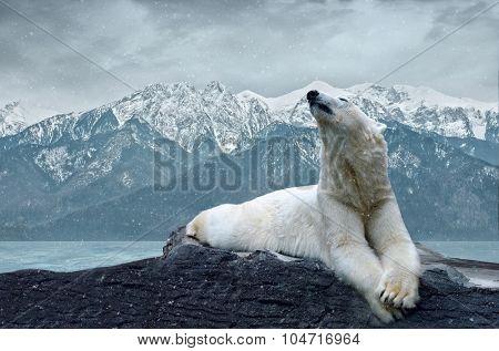 White polar bear on the ice