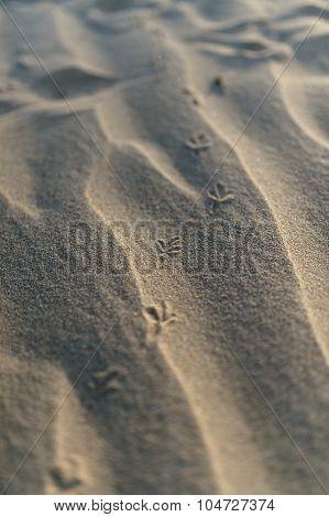 Bird Footprints In The Sand