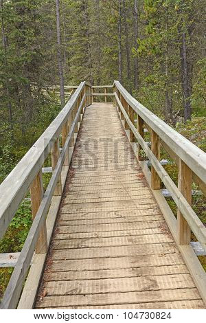 Boardwalk Into The Forest