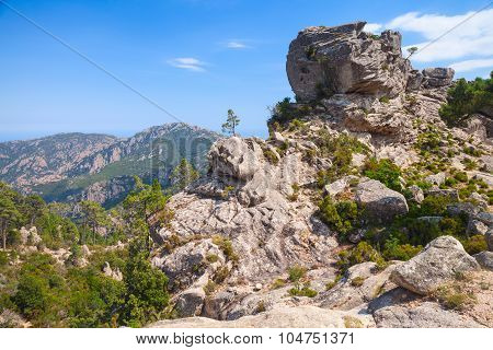 Wild Mountain Landscape With Small Pine Trees