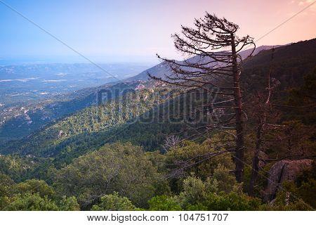 Dead Pine Tree Silhouette In The Evening Sunlight
