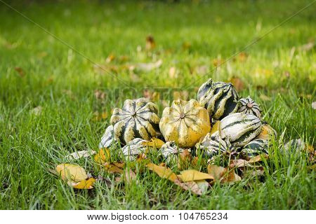 Decorative pumpkin on green grass
