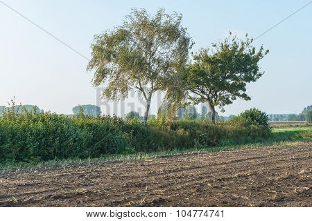 Two Trees Beside The Edge Of A Corn Stubble Field