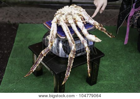 Crab On The Scales.