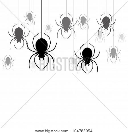 Spiders on white background.