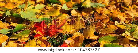 Colorful leaves background.