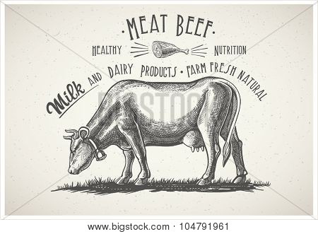 Cow in graphic style, image made from hand drawing.