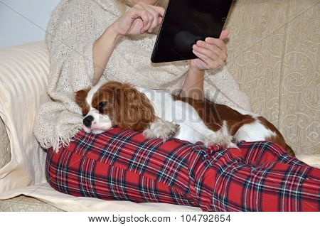 Lady Reading On Tablet And Cavalier Dog