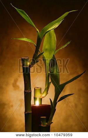 Bamboo Stems And Leaves With Burning Candles For Meditation