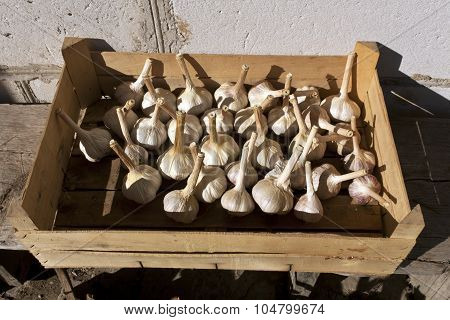Dry Garlic In Wooden Crate.