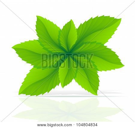 Abstract Mint Leaves Vector Illustration