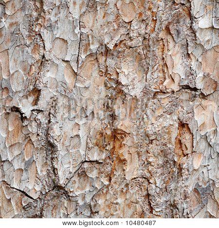Seamless Texture -  Bark Of Pine
