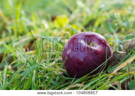 red apple on green grass