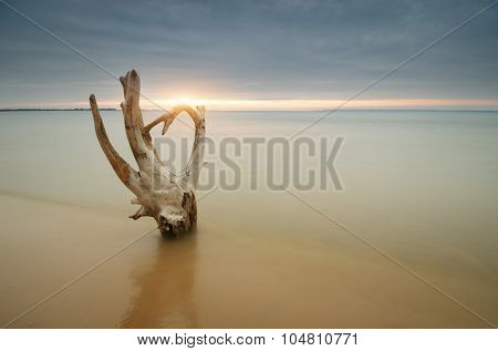 Snag on the shore. Beautiful and conceptual nature composition.