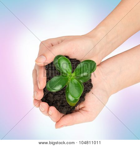 Humans hands holding plant with ground, top view