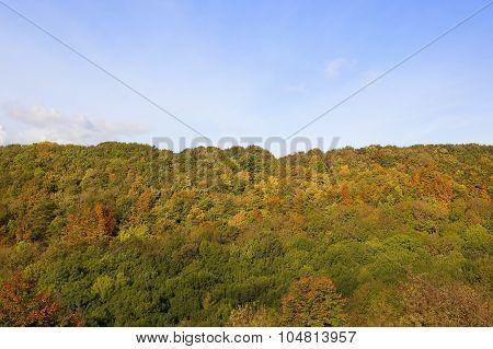 Woodlands In Autumn