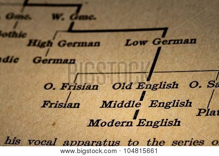 Explanation Of The Evolution Of English Language From Indo-european To Modern English