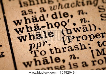 Close-up Of An Opened Dictionary Showing The Word Whale