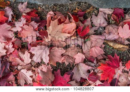 Autumn Leaves Closeup 2