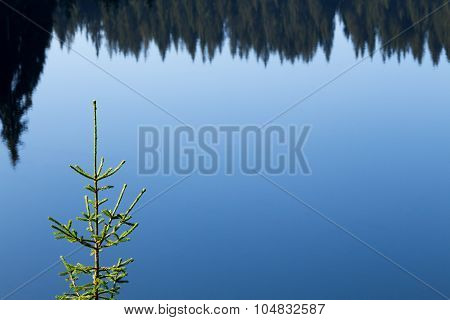 Emerald green fir on the background of blue surface of forest lake and reflections of pine forest in the water early in the sunny morning in the Rhodope Mountains (Rhodopes Bulgaria)