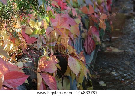 Autumn leaves over irrigation ditch