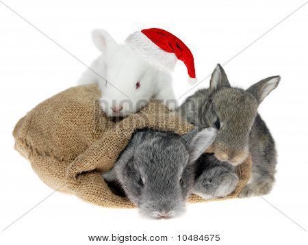 Rabbits In The Bag In The Santa Claus Hat