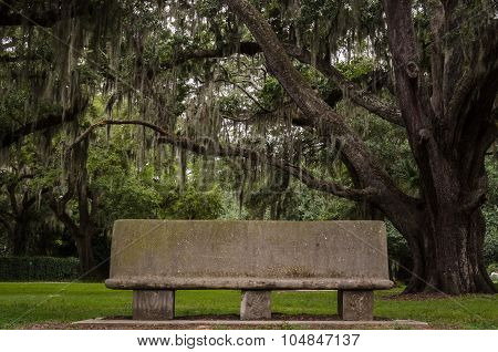 Bench In Live Oak Grove