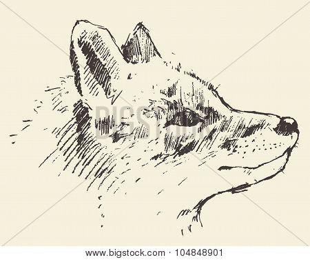 Fox head style vintage illustration drawn sketch