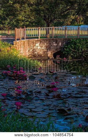 Water lily pond outdoors in Tobago Caribbean bridge garden