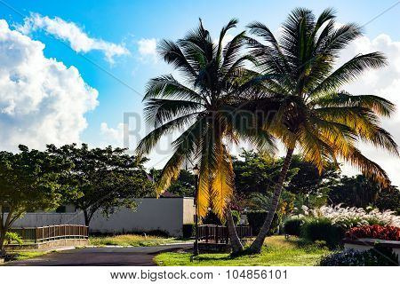Outdoors walkway and bridge in sunny tropical nature of Tobago Caribbean