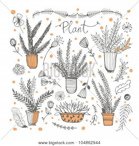 Collection hand drawn element design. Drawing plants in pots.
